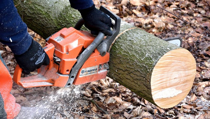 tree stump removal service raleigh