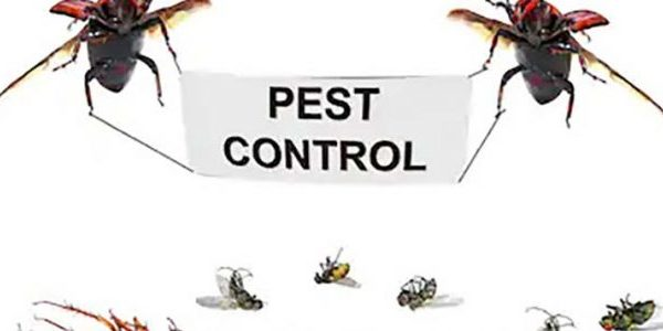 Pest control Key West